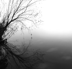 Lonely tree with reflection in water