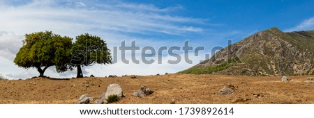 Lonely trees on rocky land. Hiking in Rif mountains near Chefchaouen town, Morocco. Panoramic landscape of North Africa. Nature background Stockfoto ©