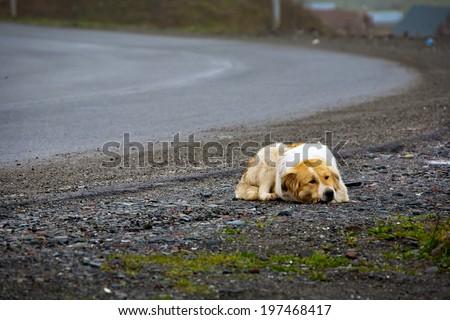 Lonely waiting lying old dog