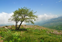Lonely weathered tree on a hill in the mountains of Crete, Greece
