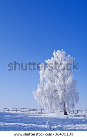 Lonely white frost covered tree against blue sky on a bright winter morning
