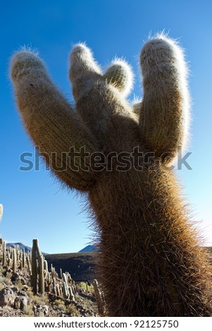 LonelyCactus in the mountain desert - stock photo