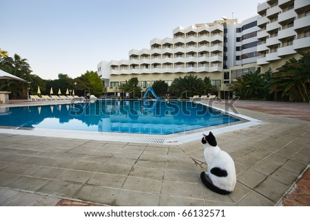 Lonesome cat sitting beside swimming pool of a resort hotel, Turkey