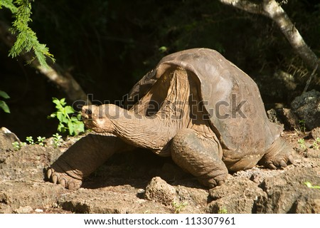 Lonesome George, taken a few days before his death