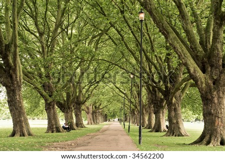 Long alley on a summer day with a dense pattern of branches