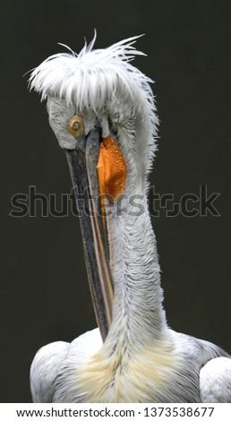 Long Beak Bird