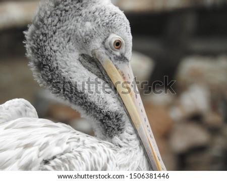 long beak bird and its majestic look