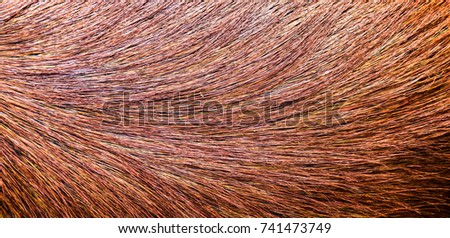 Long brown soft fur of animal is beautiful. Fur is hair covering of non-human mammals particularly those mammals with extensive body hair that soft and thick. Dark brown hair beautiful of some animal #741473749