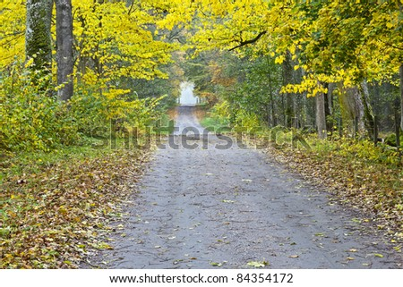 Long countryside road straight stretch through  the deciduous forest in autumn - stock photo