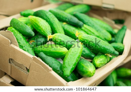 Long cucumbers in box in supermarket