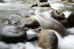 long exposure of creek water, with autumn leaf on rock