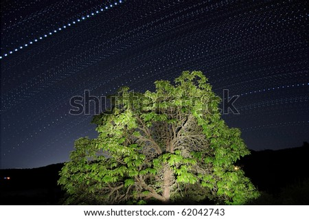 Long exposure of star trails passing by an illuminated tree. The star trails are dotted lines, not solid lines.