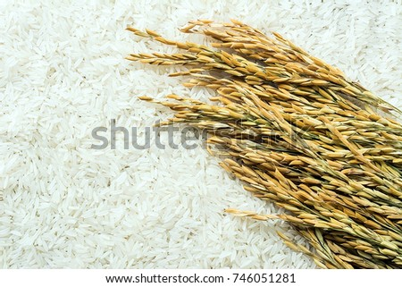 Long grain of rice and rice #746051281