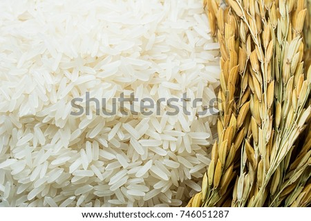 Long grain of rice and rice #746051287