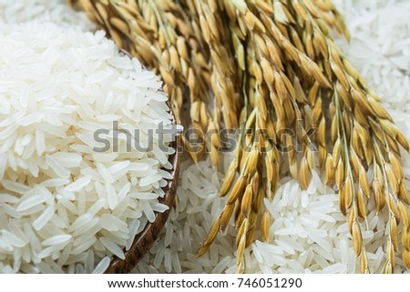 Long grain of rice and rice #746051290