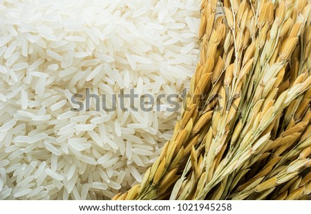 Long grain rice and rice #1021945258