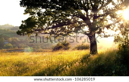 Long grass and tree in morning light