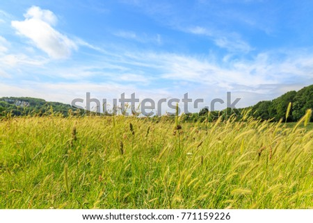 Long Grass in the Countryside #771159226
