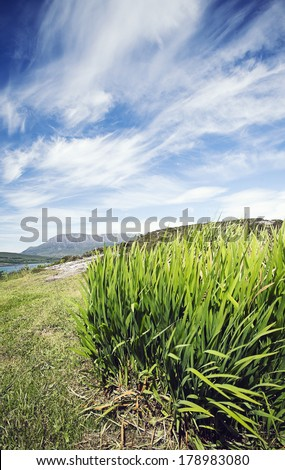 Long grass on hill top. Cirrus cloud formations in sky above long grass on Scottish hill top.
