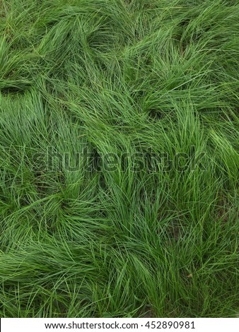 Free photos Tall grass texture for background Avopixcom