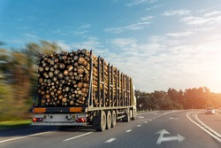 Long heavy industrial wood carrier cargo vessel truck trailer with big timber pine, spruce, cedar driving on highway road with blue sky background. Timber export and shipping concept