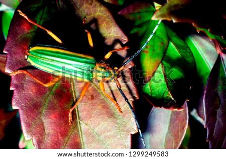 Long-horned beetle #1299249583
