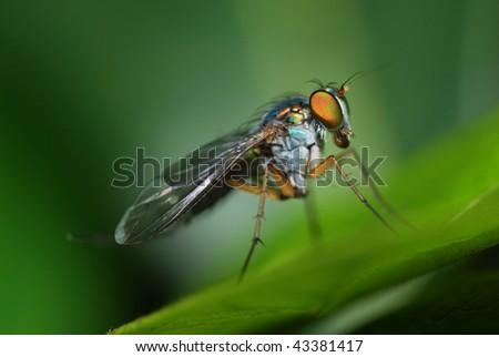 Long legged fly #43381417