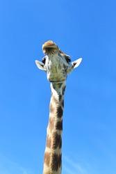 Long neck view