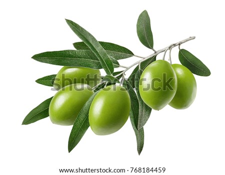 Long olive branch isolated on white background as package design element