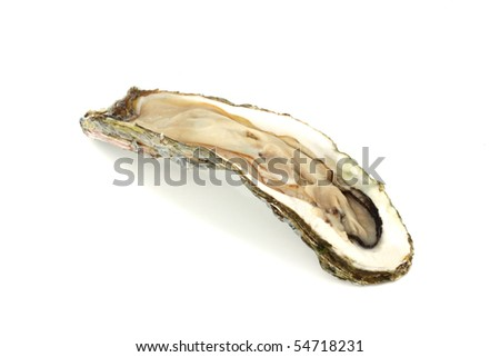 long oyster