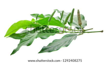 Long pepper isolated on the white background #1292408275