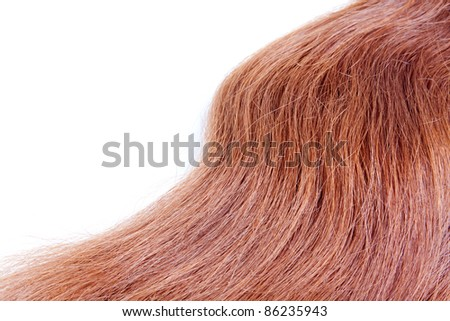 Long red hair on a white background.