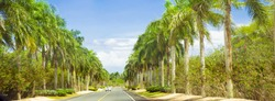 Long road lined with palm trees and blue sky