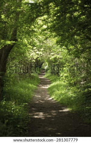 Long scenic path in a forest lit by sunlight through the trees