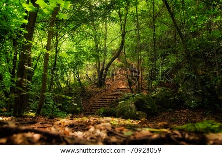 long stairs in the green forest