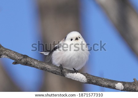 Photo of  long tailed tit in winter