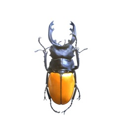 long teeth beetle isolated, Set of realistic colorful tropical beetle and insect, zoology,wild ,entomology, one alive exotic butterfly with beautiful wing collection ,insect animal stuff icon