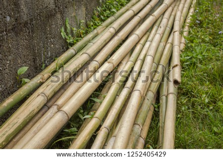 long trunks of dry gray green bamboo stalks lie on the grass near the concrete wall #1252405429