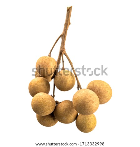Longan fruit isolated on white background. Sprig with fruits longan. Eye of the Dragon. Source of vitamins. Asian fruits. Ingredient for cooking. Fruit diet. Healthy diet. Delicious exotic fruit.