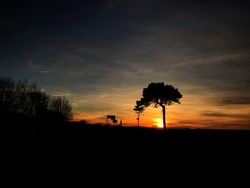 longer distance view of lone tree silhouetted against the setting sun