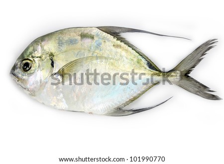 Longfin trevally fish on white background