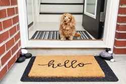 Longhair dachshund sitting in the front entrance of a home. little dog sitting by a door mat that says Hello. Doorway welcome concept.