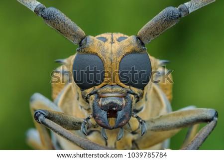 Longhorn Beetles #1039785784