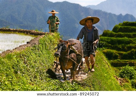 LONGJI, CHINA - MAY 16: unidentified Chinese farmers work in a rice field on May 16, 2011 in Longji, China. For many farmers rice is the main source of income (around $800 annual). - stock photo