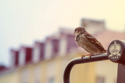 Lonley bird sitting on a fence in the town center in Bialystok, Poland.