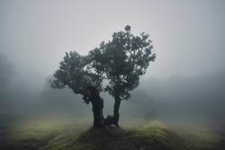 Lonley law tree in the fog