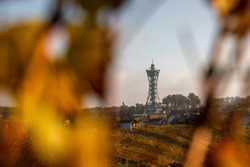 Lonley modern lookout tower surrounded by vineyards.
