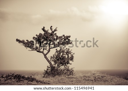 lonley tree