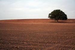 lonley tree brown field farm