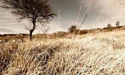 Lonley Tree in Mountain Fallow Wheat Field